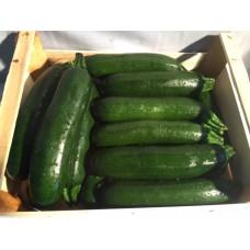 Zucchini ITAL (STK)